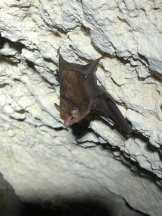 My favorite cave companion!